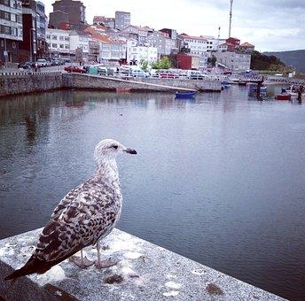 Seagull, Gull, Bird, Port, Harbour, Harbor, Seaside
