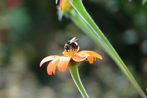 Bee, Blossom, Bloom, Insect, Nature, Pollination