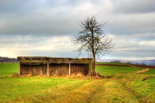 Field, Meadow, Scale, Green, Nature, Landscape, Sky