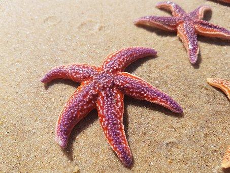 Sea Star, Star, Sea