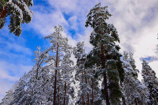 Sky, Winter, Nature, Snow, Frost, Blue Sky, Finnish