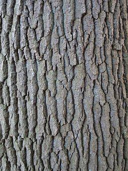 Tree, Bark, Nature, Tree Trunk, Tribe, Forest, Autumn