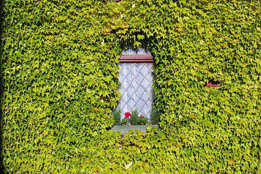 Ivy, Overgrown, House, Green, Plant, Nature, Leaf, Wall