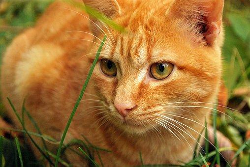 Cat, Cats, Animals, Handsome Man, Pet, Fluffy Cat