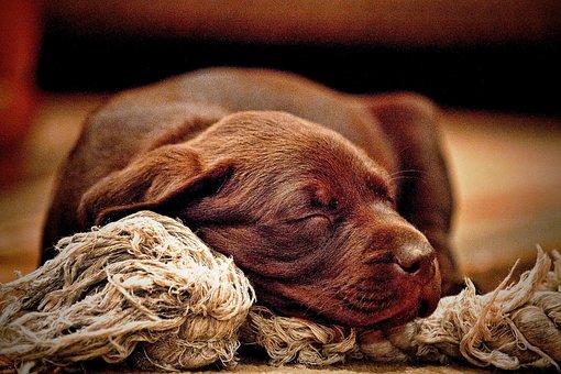 Animals, Dogs, Puppies