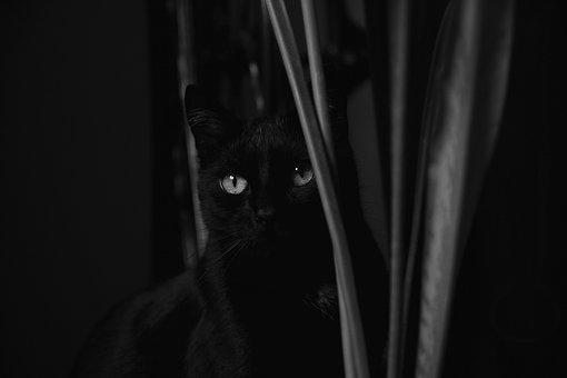 Cat, Black And White, A Young Kitten, Kitten, Animal