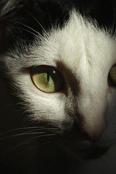 Cat, Eye, Nature, Whisker, Cat Eye, Little, Kitty