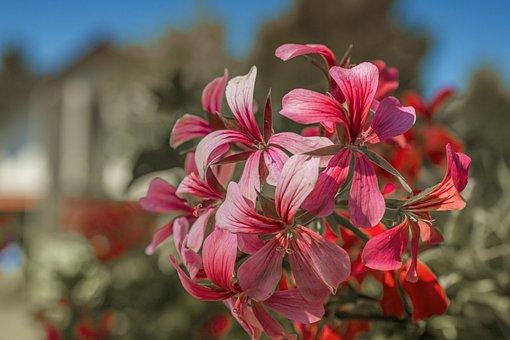 Nature, Flowers, Plant, Beautiful Flower, Garden