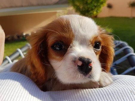 Dog, Puppy, Pet, Toy