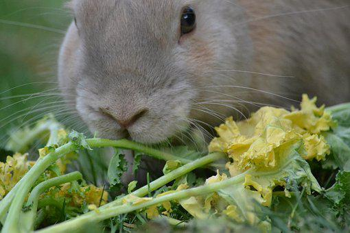 Rabbit, Healthy Eating, Healthy, Food, Nutrition, Raw