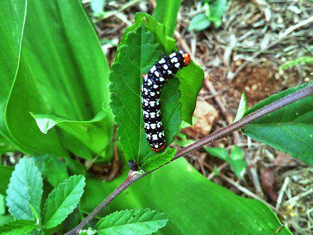 Caterpillar, Nature, Leaf, Wildlife, Green, Summer