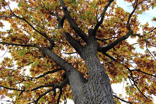 Tree, Tribe, Autumn, Leaves, Color, Yellow, Green