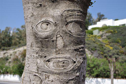 Tree, Face, Bark, Carved, Funny, Tree Face, Wood