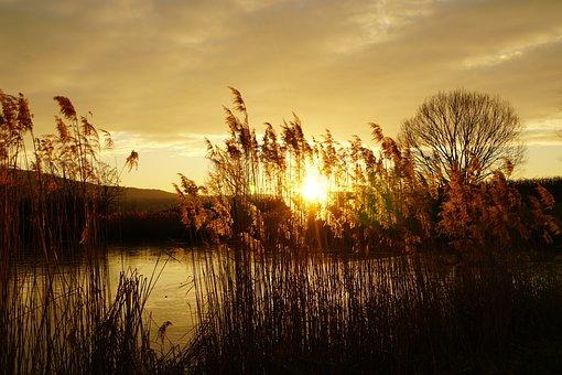 Sunset, Reed, Lake