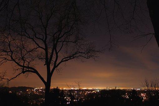 City, Night, Tree, Night Photograph, Lights, At Night