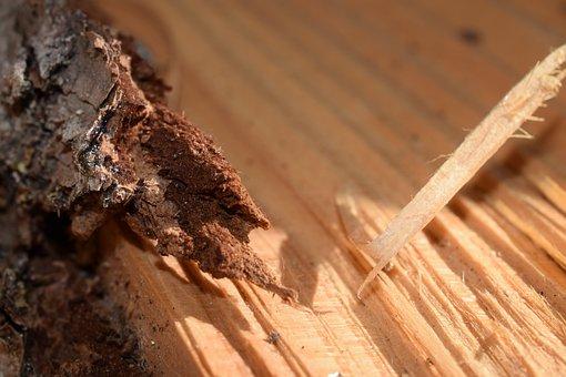 Wood, Bark, Woodworking, Nature, Mulch, Grain