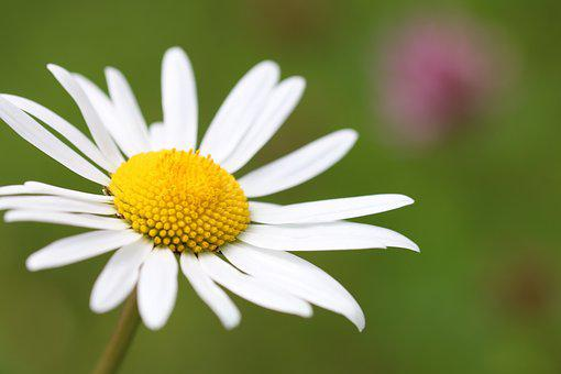 Flower, Meadow, Nature, Grasses, Wild Flowers, Plant
