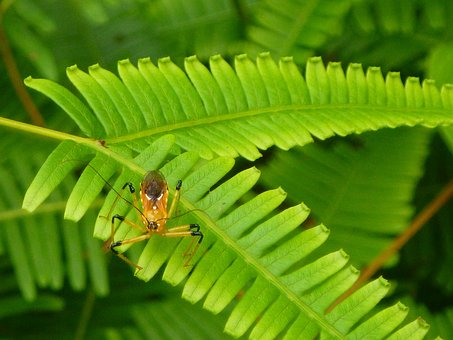 Green, Leaf, Bug, Nature, Insect, Plant, Wildlife