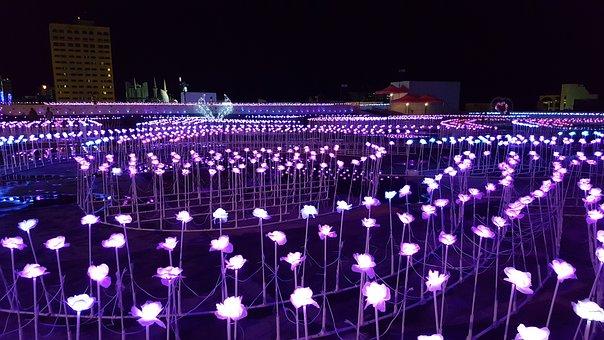 Lights, Roses, Led, Flower, Pink, Romantic, Blossom