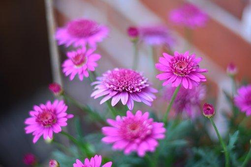 Flowers, Close, Blossom, Bloom, Plant, Nature