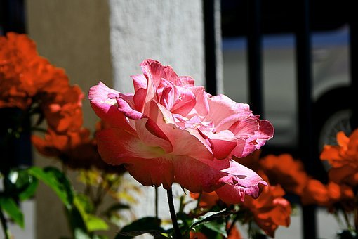 Flowers, Macro, Praying Mantis, Butterfly, Summer