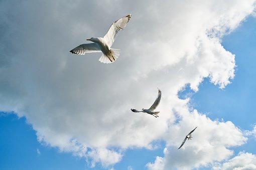 Seagull, Bird, Gulls, Day, Birds, Blue, Nature