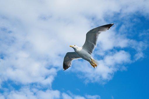 Seagull, Wing, Gull Bird, Bird, Gulls, Day, Birds, Blue