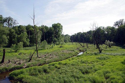Strorage, Torrent, River, Marsh, Sentimental, Green