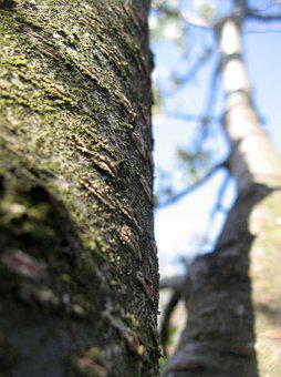 Tree, Bark, Nature, The Bark Of The Tree, Structure