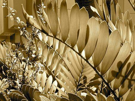 Plant, Sepia, Pattern, Photography, Nature, Retro