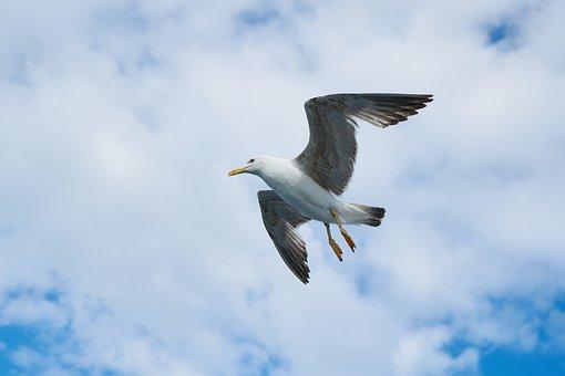 Seagull, Bird, Animal Portrait, Wing, Fly