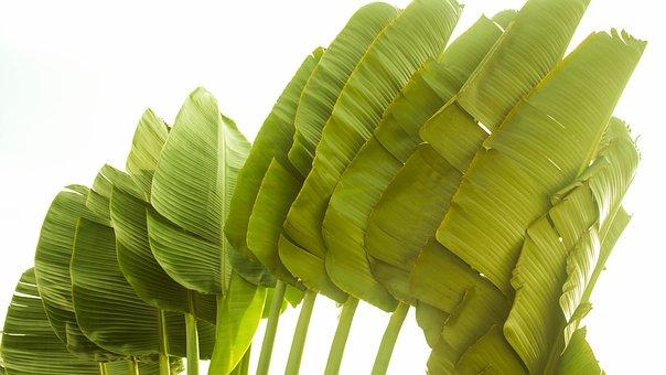Palm Tree, Brazil, Green