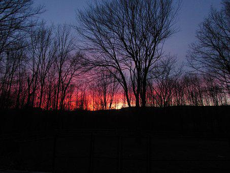 Sunset, Trees, Night, Evening, Landscape, Silhouette
