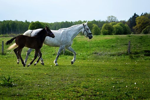 The Horse, Mare, Offspring, Horses, Mother