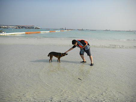 Sea, Sand, Puppy, Nature