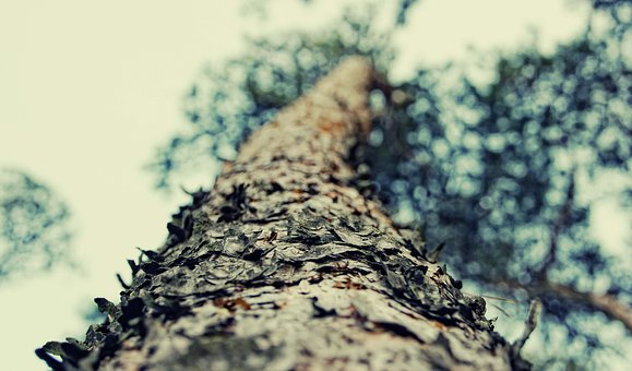 Forest, Tree, Nature, The Bark, Trunk
