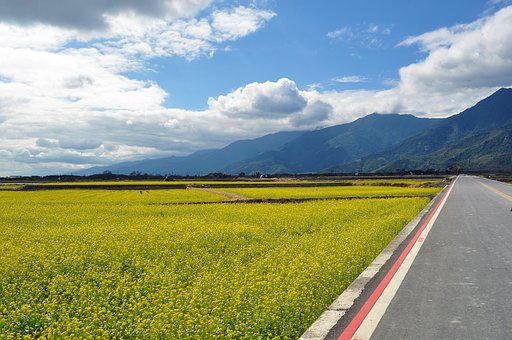 Sea Of Flowers, Countryside, The Scenery, Mountain