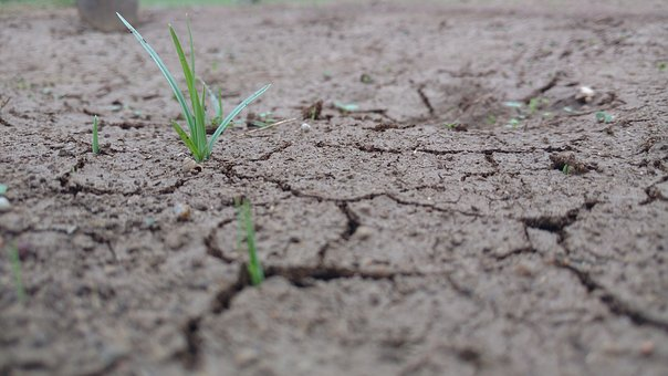 Sand, Grass, Green, Crack, Rain