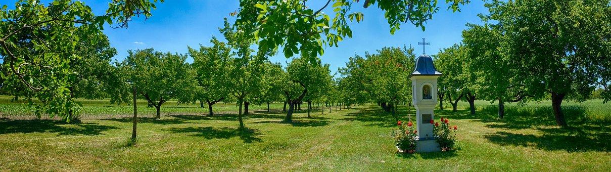 Kitsee, Sets, Trees, Apricots, Chapel, Panorama, Summer
