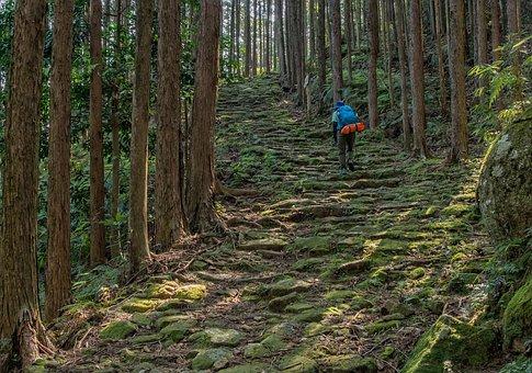 Kumano Ancient Road, Trekking, Moss, Cypress Forest