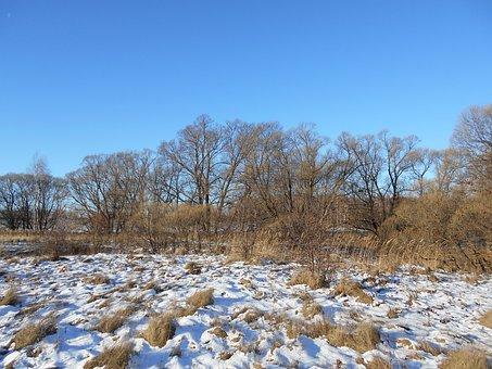 Trees, Autumn, Snow, Sky, Grass
