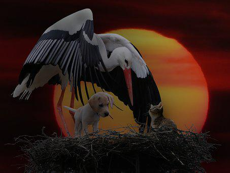 Animals, Nature, Stork, Dog, Cat, Sun, Sunset, Evening
