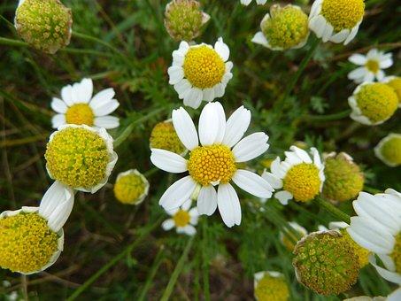 Nature, Flower, Blossom, Bloom, Plant, White