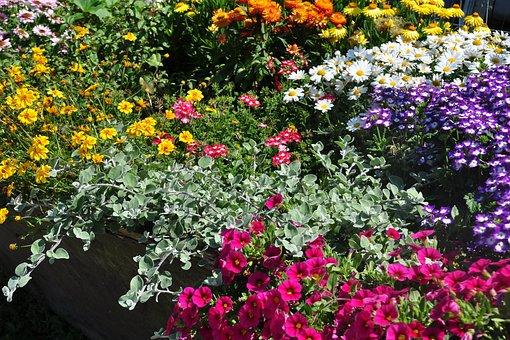 Flowers, Color, Blossom, Bloom, Macro, Farbenpracht