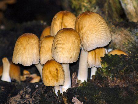 Mushroom, Nature, Forest, Autumn