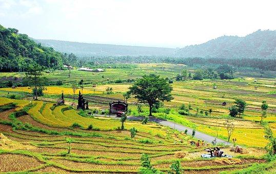 Bali, Indonesia, Rice, Harvest, Volcanoes, Landscape