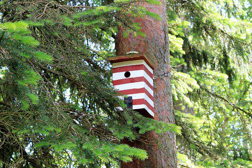 Birdhouse, Box, Nest, Bird, Forest, Gran, Pir, Red
