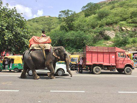Elephant, Riding, Road, Animal, Ride, Asia, Nature