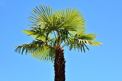 Palm, Summer, Holidays, Summer Feeling, Holiday, Sky