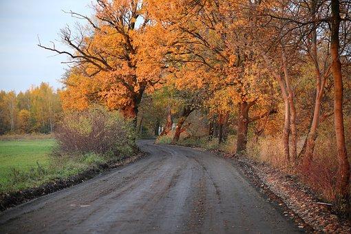 Way, Autumn, Landscape, Nature, Foliage, Forest Road